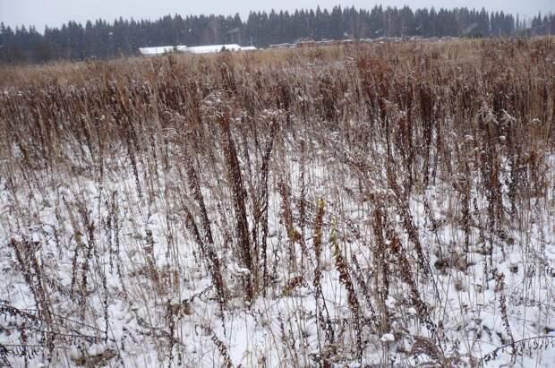 Нарушителей земельного законодательства в Удмуртии оштрафовали почти на 1,5 млн рублей
