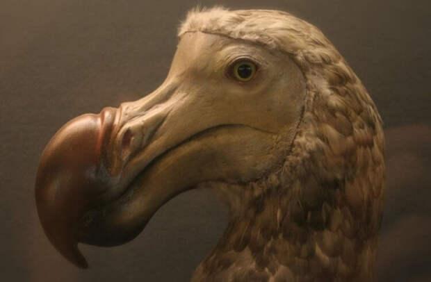 Почему в мире мало нелетающих птиц?