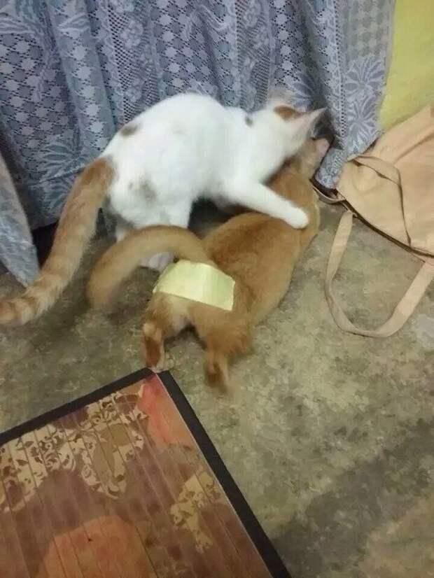 Универсальное противозачаточное для кошки голь на выдумки хитра, из говна и палок, мастера, рукожопство, смекалка