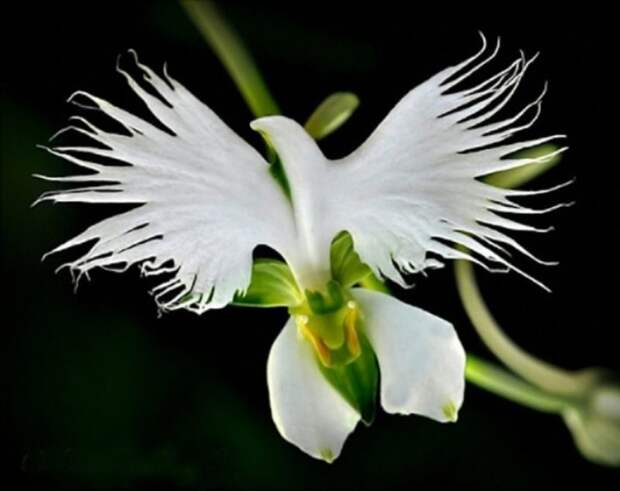 Самые необычные орхидеи, которые на самом деле существуют