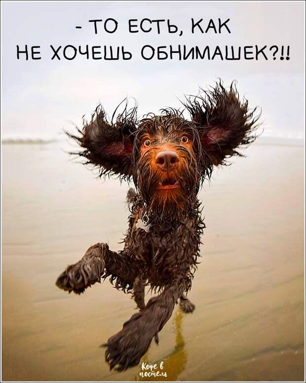 Возможно, это изображение (собака, на открытом воздухе и текст «-To есть, как не хочешь обнимашек?!! кофе кофев в постель»)