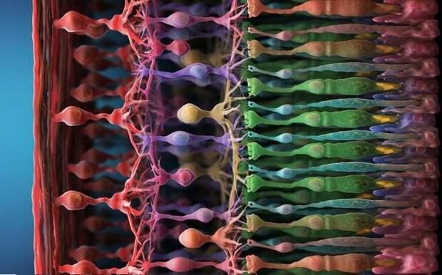Пурпур – цвет, который мозг рисует сам