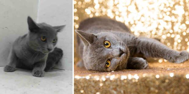 Как много значит хороший фотограф: 15 снимков животных из приюта Животные фото, до и после, домашние животные, животные, приют для животных, фотографии животных