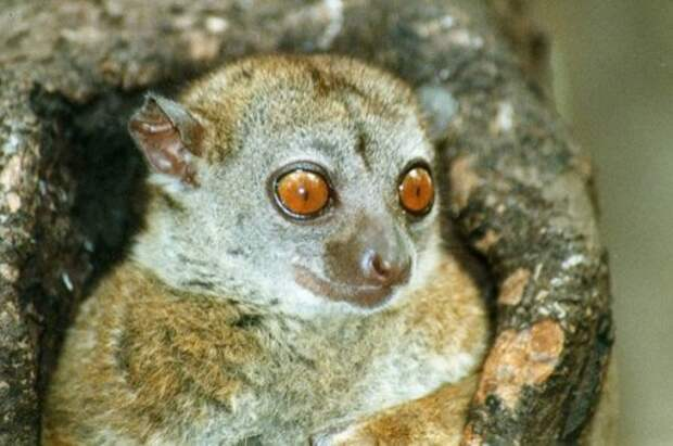 Редкие виды приматов, которые могут исчезнуть с лица Земли в ближайшие сто лет