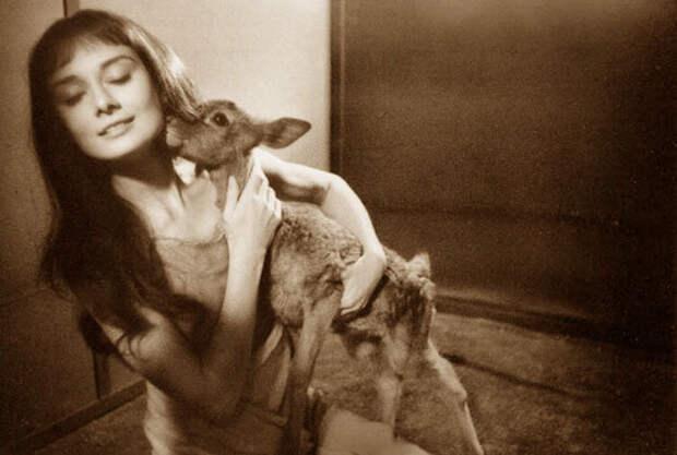 Одри Хепберн, олененок Пиппин. Фото / Audrey Hepburn, deer Pippin. Photo