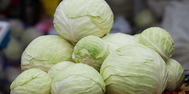 Секрет урожая: чем подкормить капусту в августе для формирования хорошего кочана