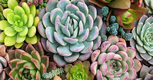 Растения для привлечения денег, любви и процветания