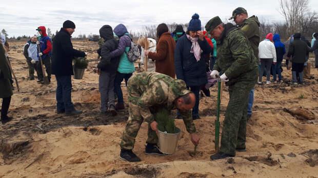 Крымские сосны посадили наместе сгоревшего леса вУсть-Донецком районе