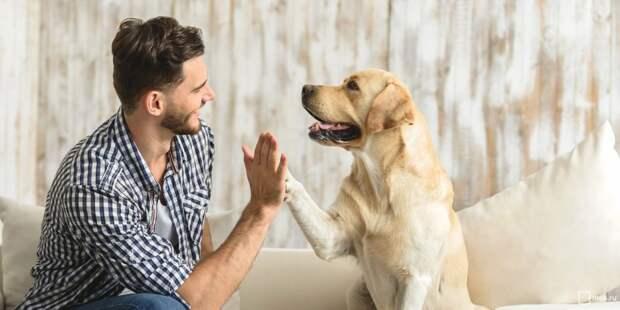 Человек и собака. Фото: mos.ru