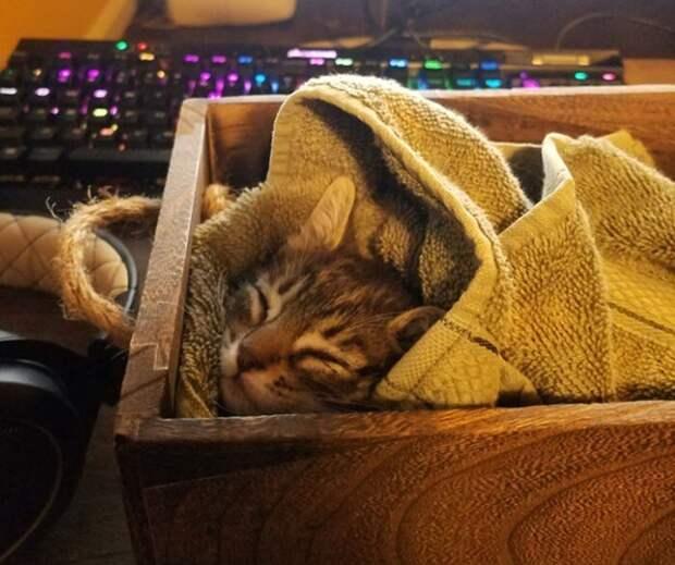 Сон - дело святое: фото котеек, после которых вам захочется подремать