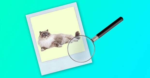 Только самый внимательный сможет найти кота на фото за 30 секунд