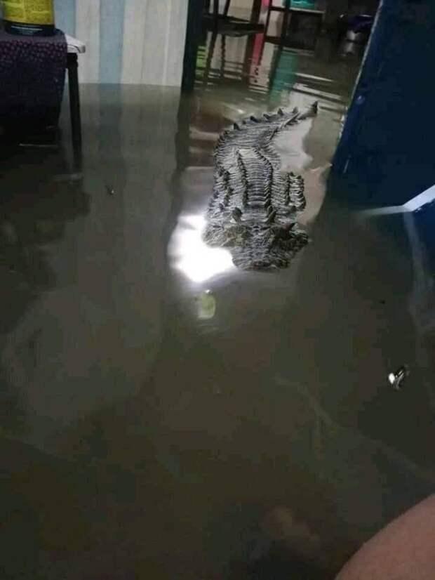 Крокодил в доме во время наводнения