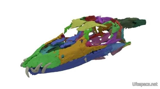 Учёные реконструировали череп древнего существа