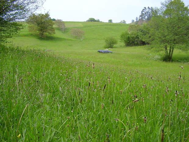 Пастбища, где выпасают скот, не только получают фосфор с навозом, но и теряют его в несколько раз медленнее, чем пашни. Все потому, что земля, подвергающаяся обработке, гораздо легче теряет минеральные компоненты после дождей, уносящих фосфор в реки. Иными словами, растениеводство бьет по фосфору в почвах много сильнее, чем животноводство  / ©freepic.com