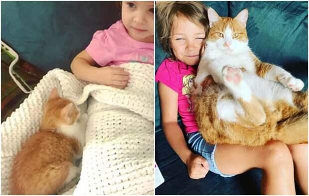 20+ трогательных фото о том, как быстро растут наши любимые котейки