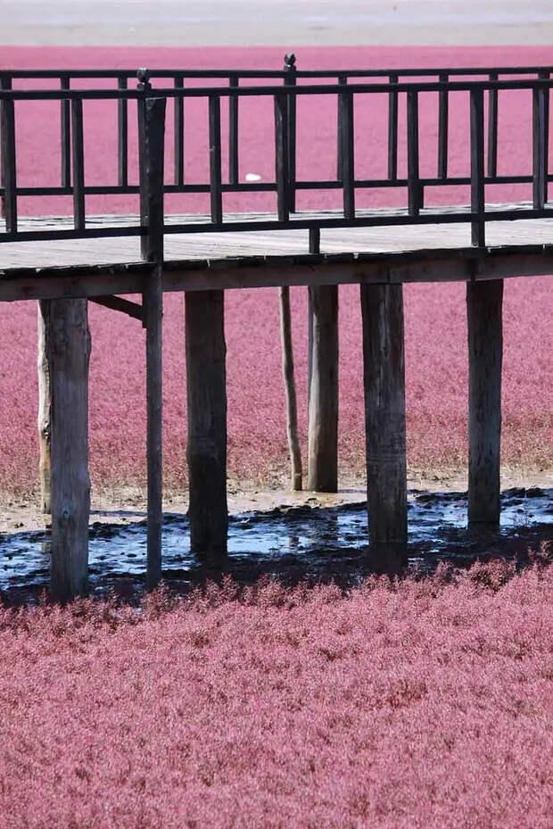 Красный пляж в Китае