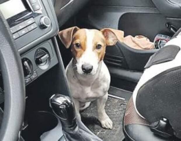 Отменная реакция помогла соцработнику из Ростокина спасти щенка