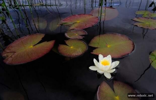 Мир природы Вернера Боллманна (22 фото)