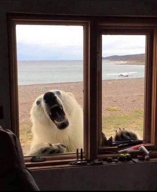 Хорошо иметь домик на Аляске