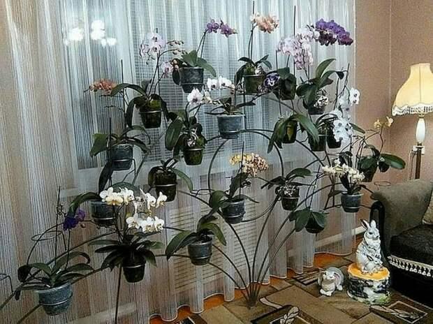 Идея выставки цветочных горшов