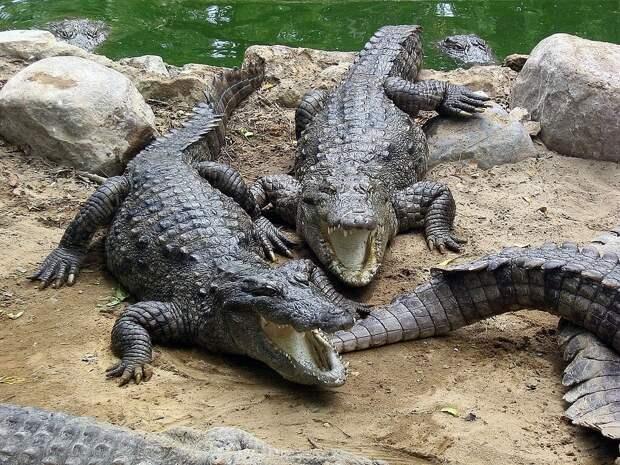 Легенда озера-убийцы: Фундудзи