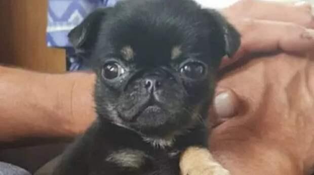 Найденного щенка захотели «усыновить» сразу 600 человек, узнав о его одиночестве