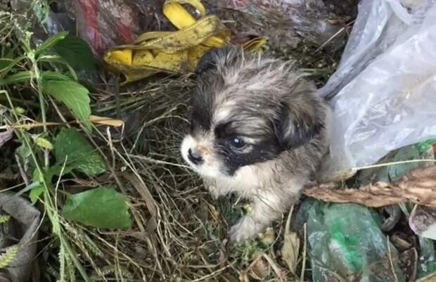 Промокший и замерзший беззащитный щенок, в поисках еды бегал по мусору