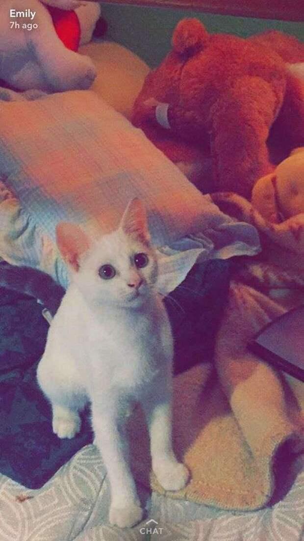 «Оставалось всего пару секунд!» Мужчина срывал пол в спальне, пытаясь добраться до тонущей кошки…