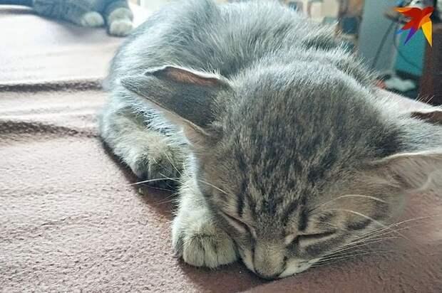 Уникального четырехухого котенка выбросили на помойку в Новосибирске