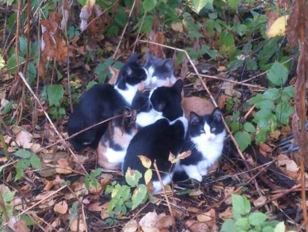 Оставлять котят на дачных участках было нельзя/ из архива Татьяны Семеновой