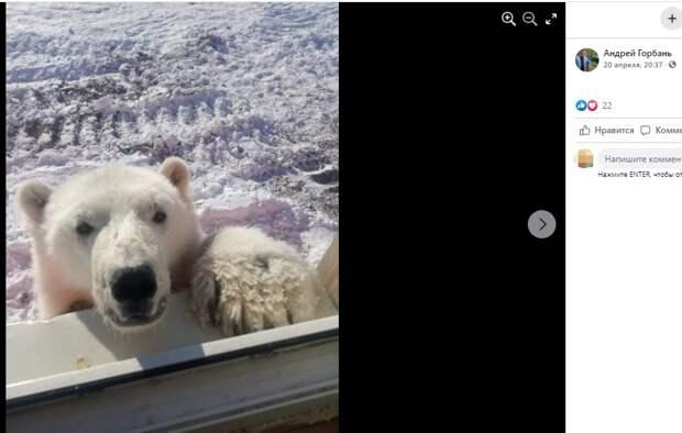 Золотодобытчики спасли белого медвежонка и отправили жить в Москву