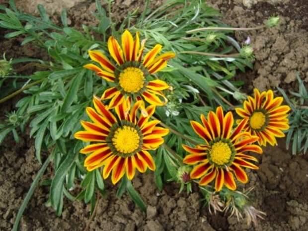 четыре желтых цветка