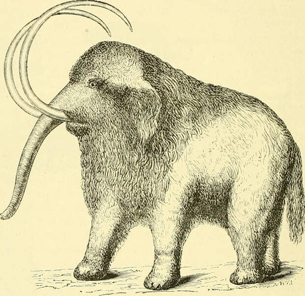 Былинная охота на мамонтов и прочие спекуляции