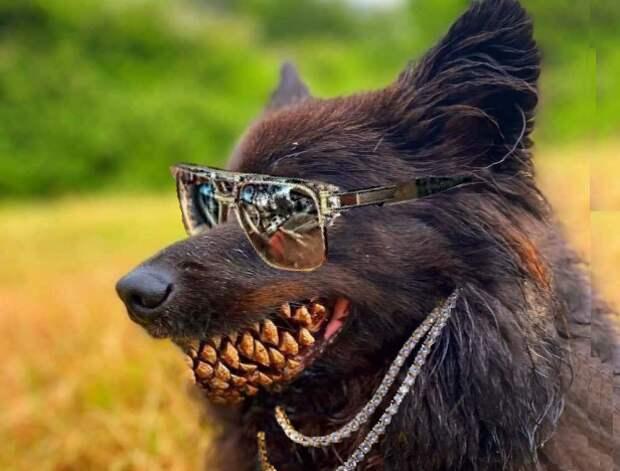 Пес сшишкой впасти стал героем мемов ифотожаб
