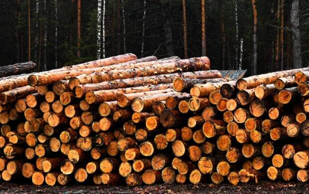 В Финляндии прокомментировали указ Путина о запрете вывоза древесины