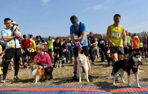 В Битцевском парке прошел необычный забег с собаками