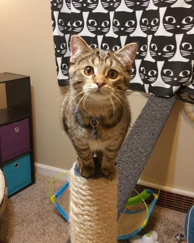 Котёнок с особыми потребностями получает помощь от «Мистера Мамы»