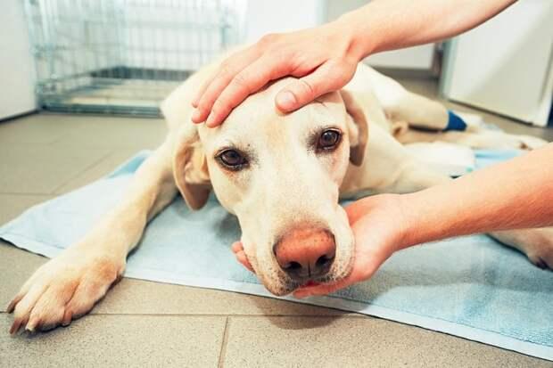 """""""Злой"""" ветеринар показал, почему нельзя бросать животных в одиночестве у врача"""