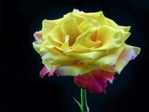 розы фото 170320 – 18