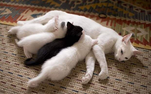 Вот так выглядят идеальные кошачьи семейства!