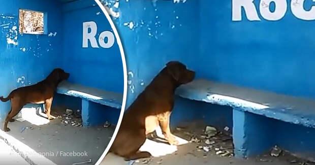 Собака пялится на стену уже в течение трех дней. И никто не знает почему