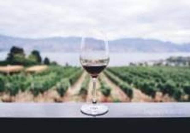 Бельгийцы первые в дегустации вин