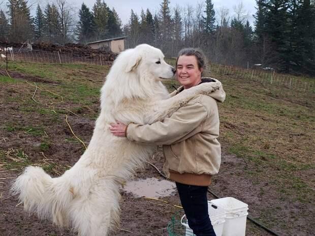 собака и хозяева