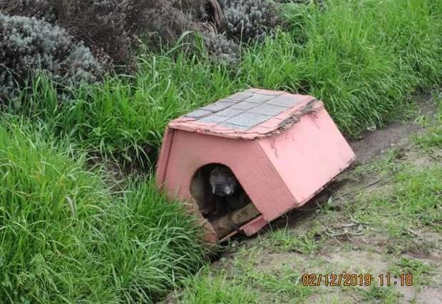 В брошенной на дороге будке ютился перепуганный питбуль история, история спасения, помощь животным, собака, собаки, спасение животных