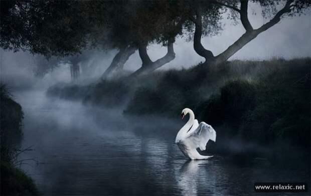 Мир природы Алекса Сабери (22 фото)