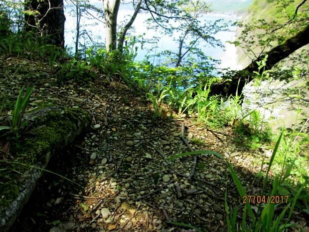 Морская галька на вершине скалы, на заднем плане деревья, выросшие после потопа.