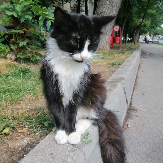 Жители улицы Генерала Карбышева ищут хозяина  чёрного кота