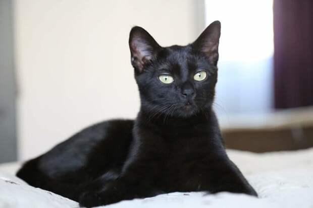 В общей сложности лечение продолжалось около года, но в результате Шури удалось победить все болезни домашний питомец, животные, забота, кошка, спасение