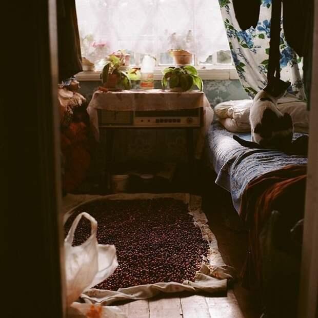 Жизнь простой русской деревни в объективе профессионального фотографа Изборск, варвара лозенко, русская деревня, фотография