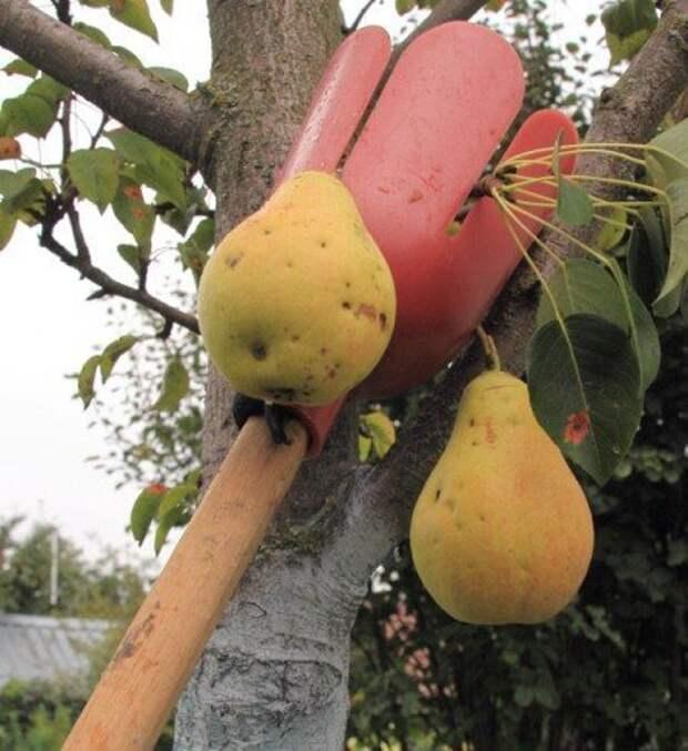6. Называется эта штуковина телескопический плодосъемник, но его можно сделать и из подручных средств, не хуже дача, дачники, дачные инструменты, дачный инвентарь